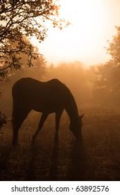 Silhouette of a grazing Arabian horse in heavy fog against sunrise in rich sepia tone