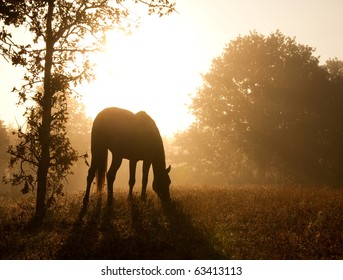 Silhouette of a grazing horse against morning sun shining through a thick fog, in sepia tone