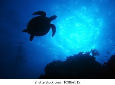 silhouette green turtle swimming in blue ocean,great barrier reef, cairns, queensland, coral sea, australia pacific loggerhead