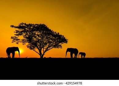 silhouette group of elephant under tree on sunset