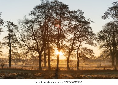 Silhouette of a group of trees in the countryside during a winter sunrise.