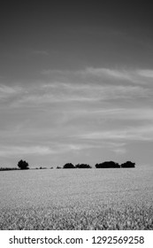 Silhouette of a group of trees on the horizon, black and white