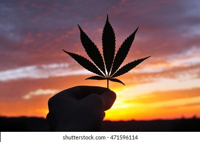 Silhouette of hand, holding cannabis leaf at sunrise