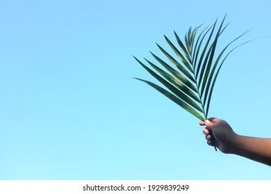 Silhouette of hand holding palm leaf on bright sky blue background with copy space. Palm Sunday celebration.