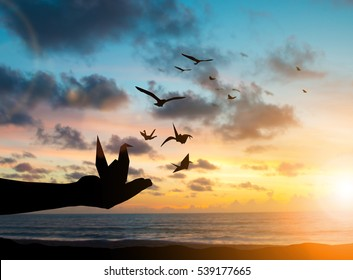 silhouette hand kid release paper bird to fly with the birds freely imagination praying and free bird fly over blurred nature sunset background.