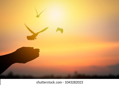 Silhouette of hand releasing birds and flying to freedom life, concept as hope and free