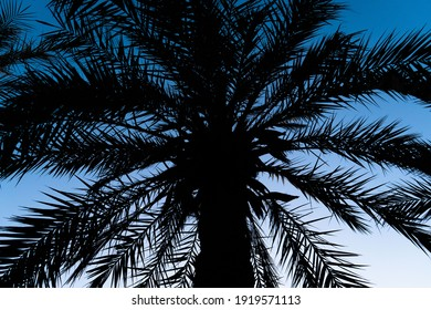 silhouette of the head of a palm tree with the light of the blue sky in the background