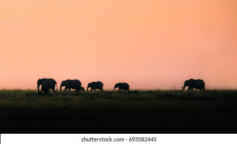 Silhouette of a herd of elephants walking along the grasslands of the Mara Triangle in Kenya, Africa at sunset