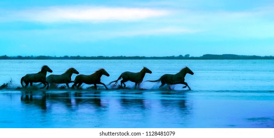 Silhouette of a herd of white horses running through the water - texture effect placed over the image to make it look more like a painting - Camarge, France