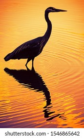 Silhouette of a heron bird in the water during sunset.
