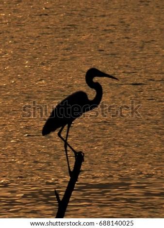 Silhouette of Heron in Thailand waterway