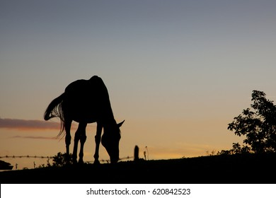 Silhouette of Horse in the field
