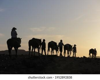 Silhouette horseback riders leading horses into sunset sunrise