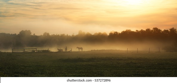 Silhouette of horses in a foggy field during a sunrise.
