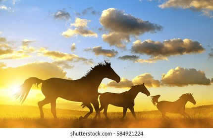 Silhouette of a horses in gallop at sunset.