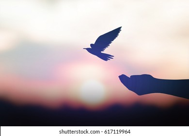 silhouette human hand release pigeons