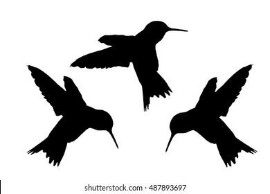 Silhouette of Hummingbird Trio