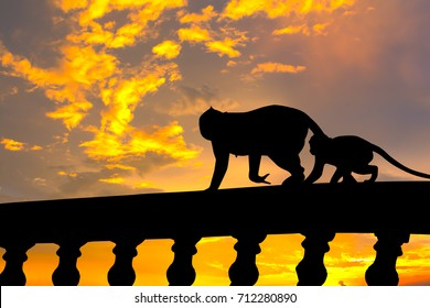 Silhouette image. Two monkeys (Mom and son) walking on concrete fence.