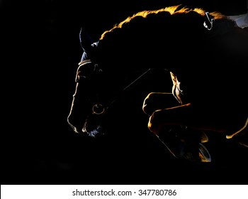 Silhouette of jumping horse on black background. Back light