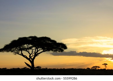 Silhouette of a large African acacia tree in an African national park