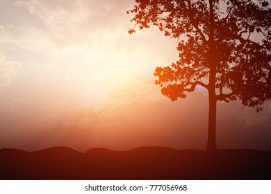 Silhouette large tree with sunlight for background texture