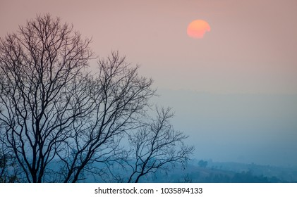 Silhouette of leafless tree branches with sunrise or sunset. During summer in Thailand, Southeast Asia.