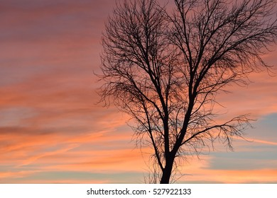 Silhouette Leafless Tree Red Clouds