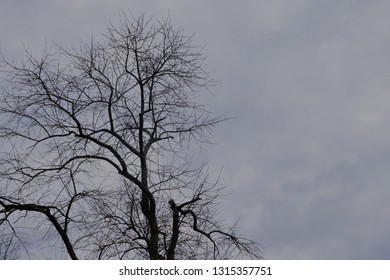 Silhouette leafless treetop against hazy sky, Winter in Georgia USA.