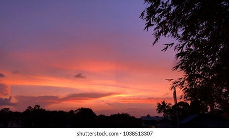 Silhouette leaves in sunset and golden sky with windy weather tree.