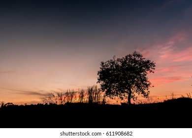 Silhouette light  tree in evening  on farm in Bago city , Myanmar
