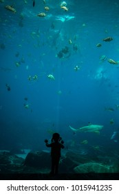 Silhouette of little child in front of large aquarium tank. Pointing at fish in the water.