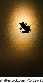 Silhouette little Frog on a glass background