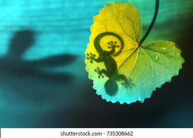 Silhouette of a lizard shadow on a green tropical leaf in nature on a blue and green background  close-up macro. Bright colorful artistic way of life of animals in nature