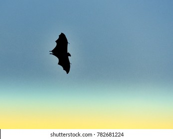 Silhouette of a lone bat flying against blue sky