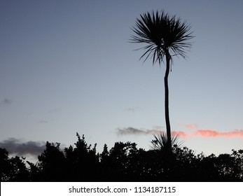 Silhouette of lone nikau palm at sunrise, Petone Lower Hutt New Zealand