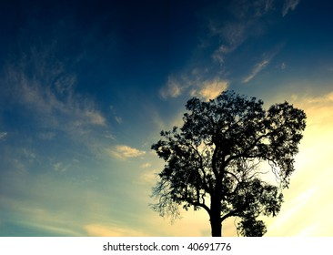 A Silhouette of a lone tree at sunset in Panorama High Res