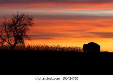 Silhouette of the lonely bison and tree in Roosevelt National Park in North Dakota at sunset.