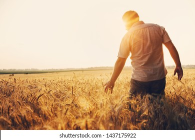 Silhouette of Man agronomist farmer in golden wheat field. Male holds ears of wheat in hand.