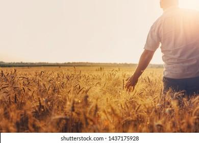 Silhouette of Man agronomist farmer in golden wheat field. Male holds ears of wheat in hand. - Shutterstock ID 1437175928