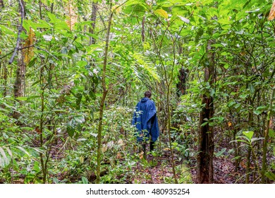 Silhouette Of A Man With A Blue Rain Coat Deep In The Amazonian Jungle, National Park Cuyabeno, South America
