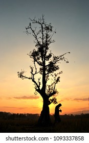 silhouette of man and kapok tree during sunset, silk-catton tree