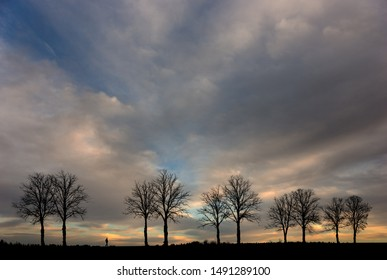 silhouette of man walking along avenue with bare trees at sunset