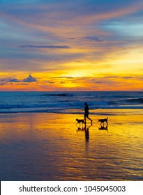 Silhouette of a man walking with the dogs on a beach at sunset. Bali island, Indonesia
