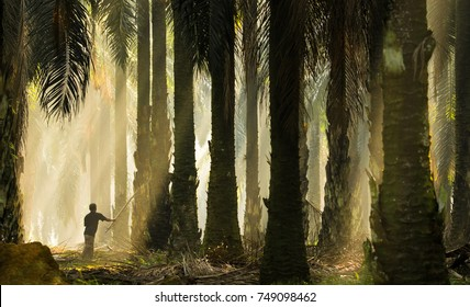 A silhouette man working in palm oil plantation with amazing morning ray of light. Soft focus & visible noise due to high ISO.