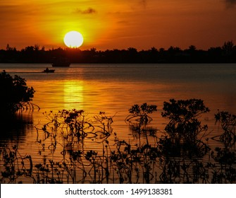 Silhouette of Mangroves and Water at Sunset