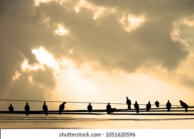 Silhouette. Many birds stand on the  cable wires.in the sky.The sun shines from the sky.sepia color