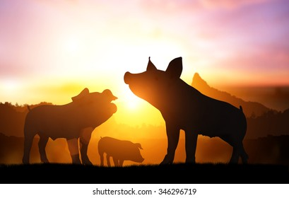 silhouette many farm pig in sunset for