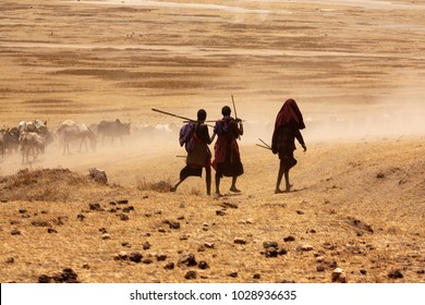 Silhouette of Massai boys driving cows to drink water