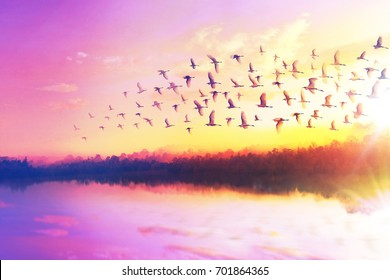 Silhouette of masses great egret flying at the sunset sky, migration concept.
