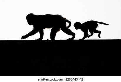Silhouette of monkey mother and child running